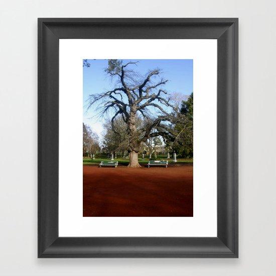 Elm Tree Framed Art Print
