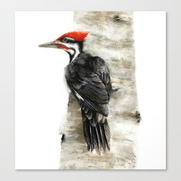 Pileated Woodpecker Watercolor Canvas Print