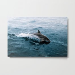 Dolphin in the Atlantic Ocean - Wildlife Photography Metal Print