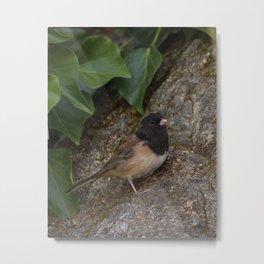 Junko backyard bird Metal Print