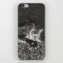 Cat Paws and Plays iPhone Skin