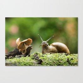 Wifi Snail Canvas Print