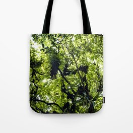 Sunlight Filtering through Ferns and Palm Trees in the Lush Rainforest of Mombacho Volcano, Nicaragu Tote Bag