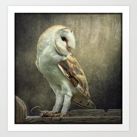 Barn Owl and Mouse Art Print