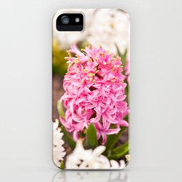 Hyacinthus flowering cluster pink iPhone Case