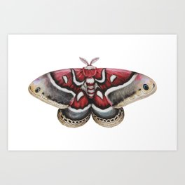 Moth - HYALOPHORA GLOVERI - Glover's silk moth | Painting | Watercolour | Insect Art Print