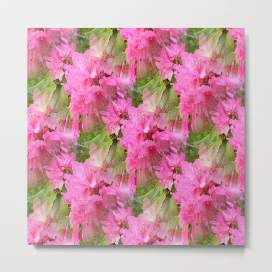 Rhodies in Pink... Metal Print