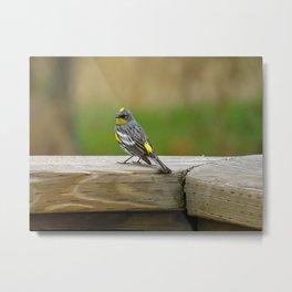 Bird Love Project 03 Metal Print