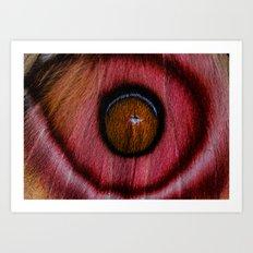 EYE SEE Suraka Moth from Madagascar Art Print