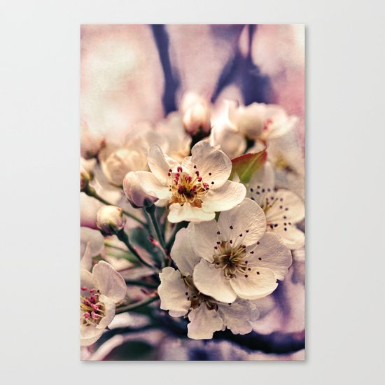 Blossoms at Dusk - vintage toned & textured macro photograph Canvas Print