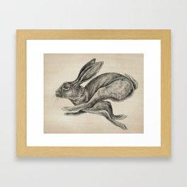 Animals   Hare Animal Illustration   Bunny   Rabbit   Nursery   Baby Room   Drawing Framed Art Print