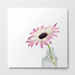 Delicate Single Pink Daisy Flower Metal Print