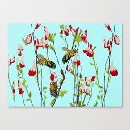 Blue Banded Bee Amegilla cingulata Canvas Print