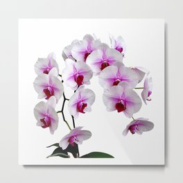 White and red orchid flowers Metal Print