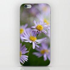3 daisys iPhone & iPod Skin