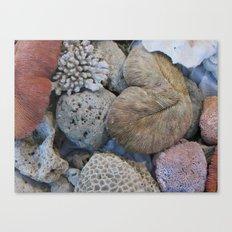 Coral Treasures of The Datai Bay ( Andaman Sea ) Canvas Print