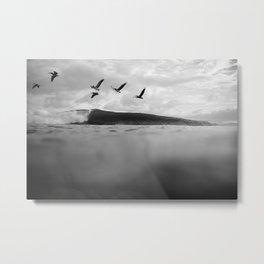 Pelícano Metal Print