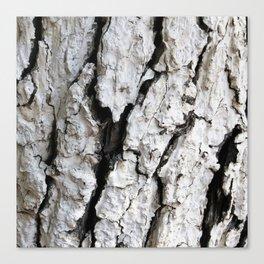 bark abstact no6 Canvas Print