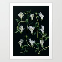 Curly Snapdragons Art Print