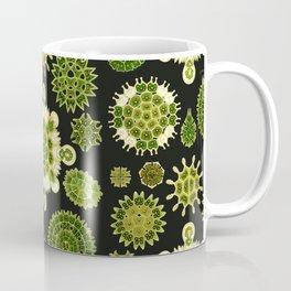 Ernst Haeckel - Melethallia Coffee Mug