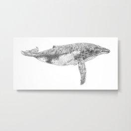 A Humpback Whale Metal Print
