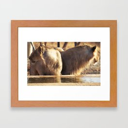 Asiatic Lion 11, Gir Forest, Gujrat, India Framed Art Print