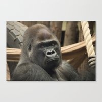 gorilla Canvas Prints featuring Gorilla  by Rob Hawkins Photography