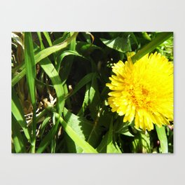 A Yellow Flower Canvas Print