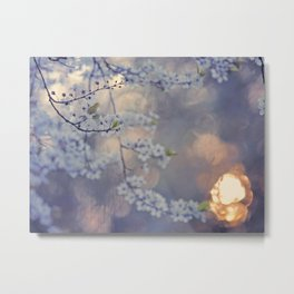 Mirabella in the setting sun Metal Print