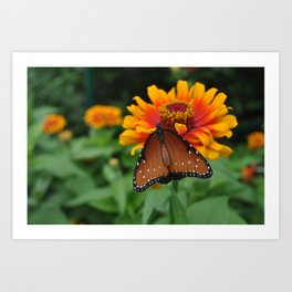 Buterfly and Zinnea Art Print