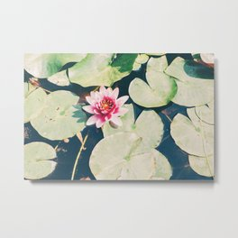 Water Lily Flower Metal Print