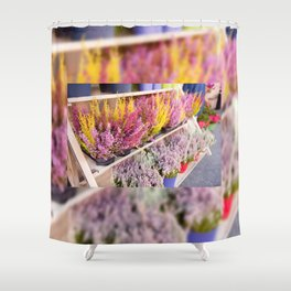 shelves with blooming heather Shower Curtain