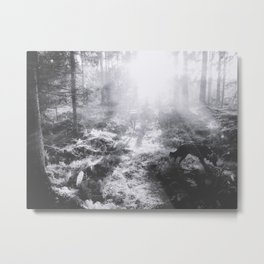 Looking for chanterelles Metal Print