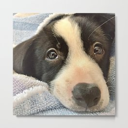 Sleepy Puppy Eyes Metal Print