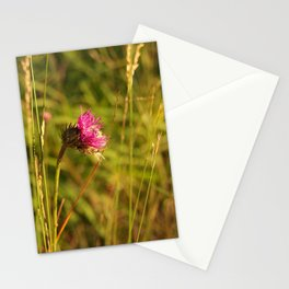 Carduus acanthoides plant, Dolomiti mountains, Italy II Stationery Cards