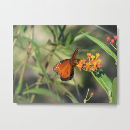 Queen monarch butterfly Metal Print