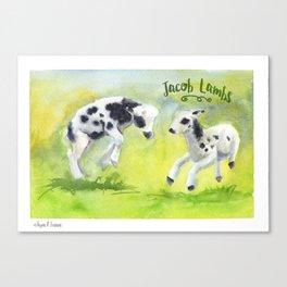 Jacob Lambs Canvas Print
