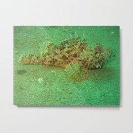 ScorpionFish, RedFish Metal Print