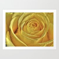rose gold Art Prints featuring Gold Rose by Tracy66