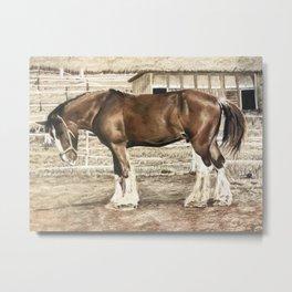 Draught Horse Metal Print