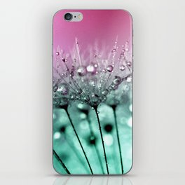 Raindrops On Dandelions iPhone Skin