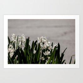 Hyacinth background Art Print