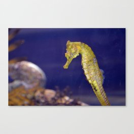 Sea Horse Photo Canvas Print