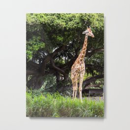 giraffe with foliage Metal Print