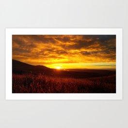 (#146) Sunlit Wheat Art Print