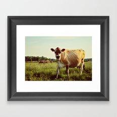 jersey cow Framed Art Print