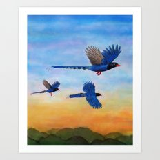 Taiwan Blue Magpies (2) Art Print