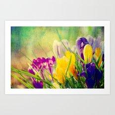 The first crocuses bloom Art Print