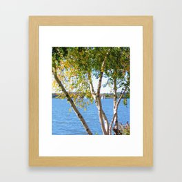 Sailing through the Birch Framed Art Print