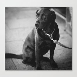 Billy the Dog Canvas Print